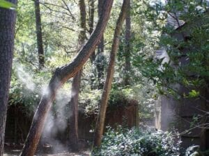 misting system in trees