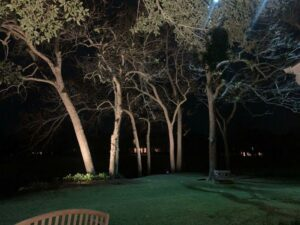 tall trees being lit up with outdoor lighting