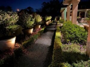 pathway surrounded by lit up plants